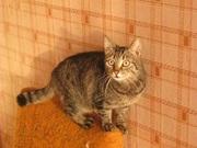 Кошка ищет дом.